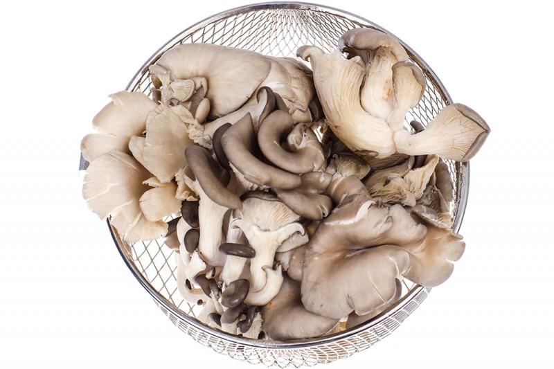 菇蕈類不需用農藥,真的不必洗?台大農化教授這麼說