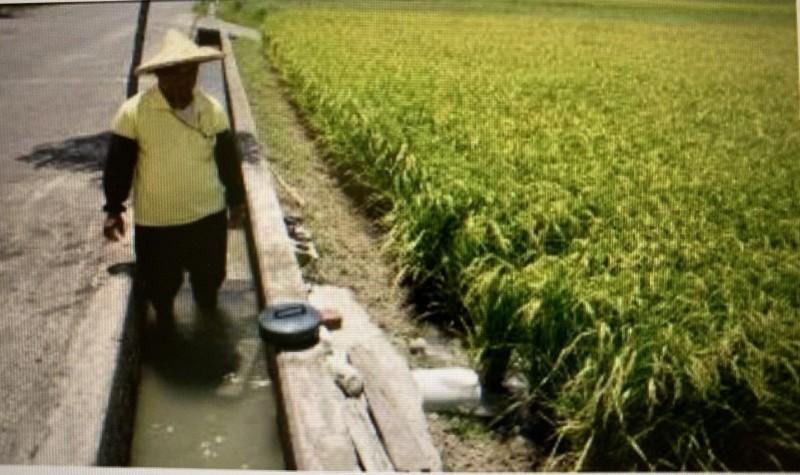 嘉南4萬多公頃二期稻6/17起輪區供灌 掌水工管控出水