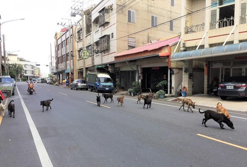 議員建議收容棄養動物的人 李茂生批政客引本尊回應
