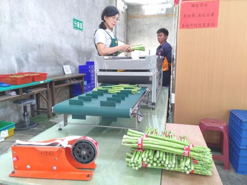 提升5倍效率 全國第一部蘆筍組合計量機台南將軍觀摩