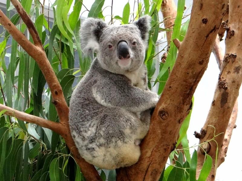 6月19日到6月28日 台北市立動物園將休園10天