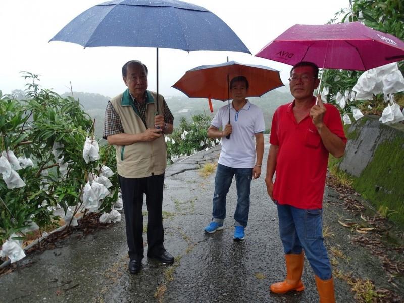 台南農業局長冒雨南化視察芒果產銷 果農:今年應不錯