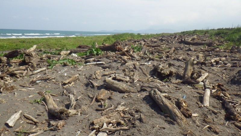 宜蘭漂流木將開放自由撿拾 但地點與對象有限制