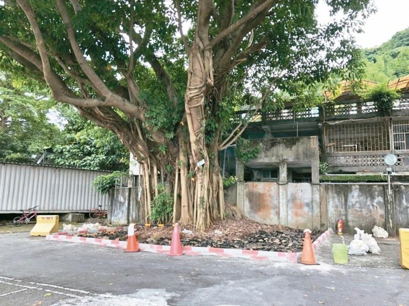 台科大「護村神樹」 終於可呼吸了
