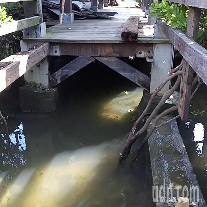 新豐紅樹林大整修 配合施工封閉到明年3月底