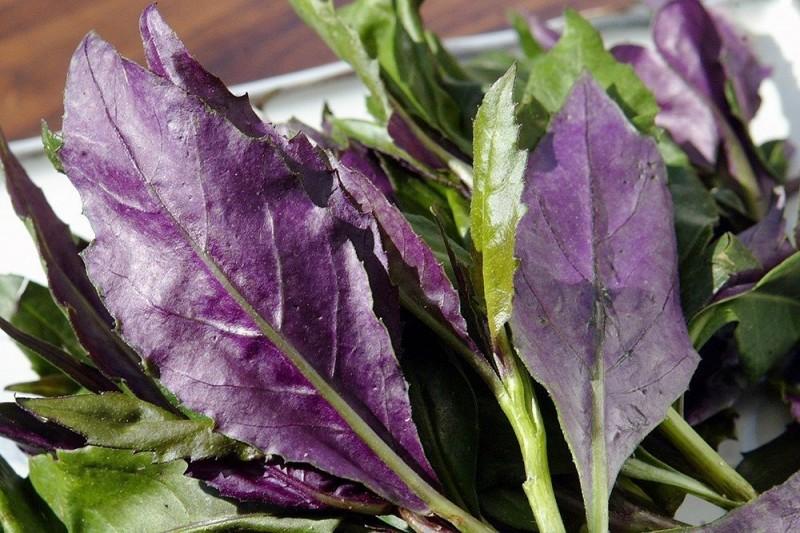 4種蔬菜被世衛列入致癌名單?其中2種確實有一點關聯