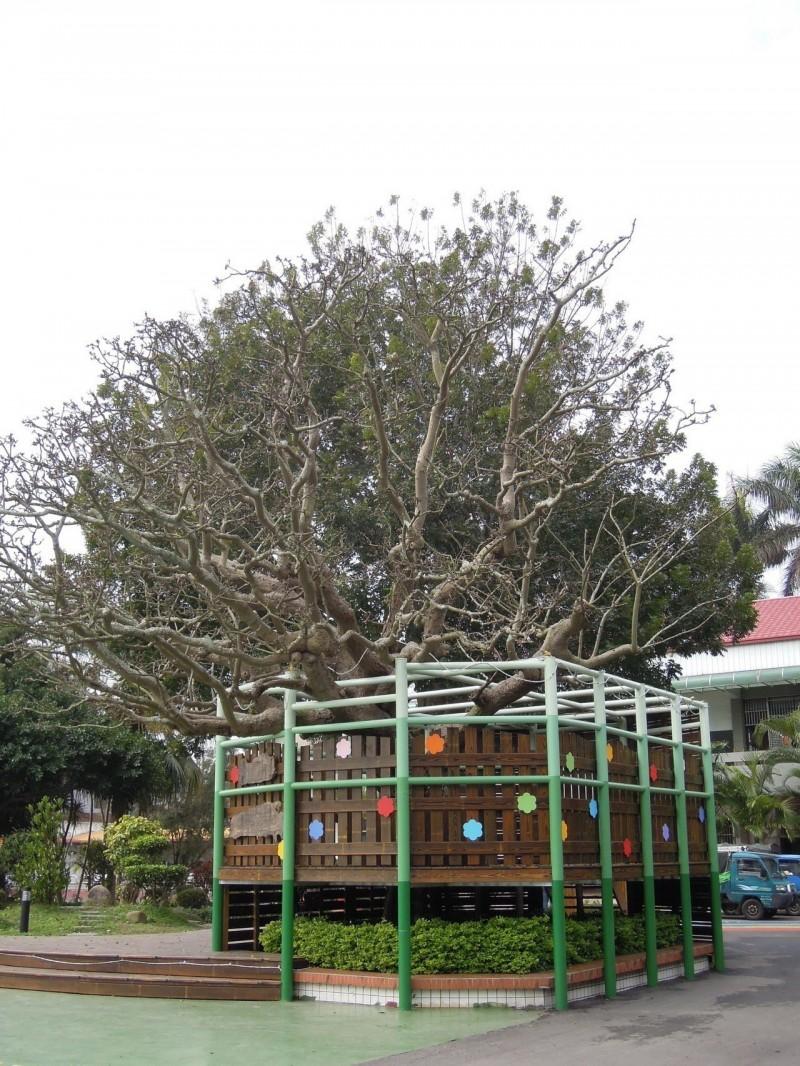 苗縣保護老樹 第1批59棵公告保護