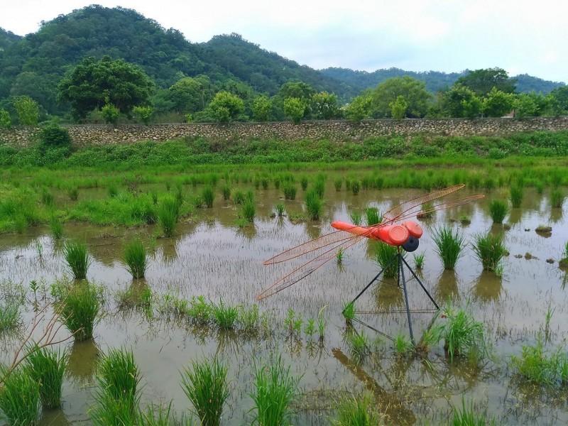 關西新地標紅色大蜻蜓 在地協會推蜻蜓復育區