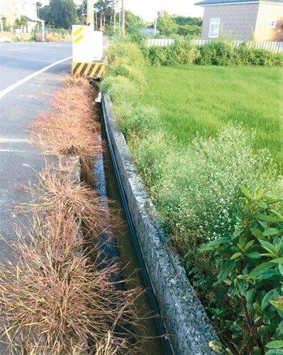除草劑除路邊野草 恆春鎮所:無法可罰