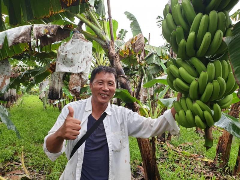 工程師返鄉種有機香蕉 精算投報率還可周休二日