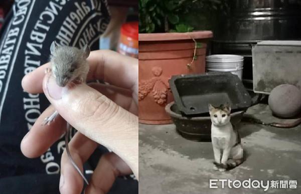 朕要養牠!愛貓叼回迷你品鼠寶 「觸感熱熱的」讓奴才崩潰